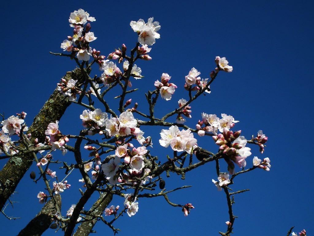 flower-693043_1920